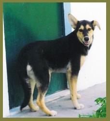 Pastorinha2